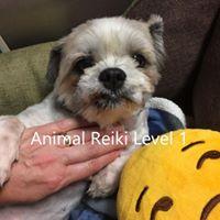 Animal Reiki Level 1 class