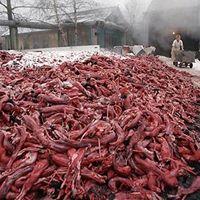 Demonstration mot minkfarmen i Svenljunga