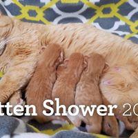 Kitten Shower 2018