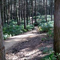 Section 2-4 of the Bracknell ramblers route