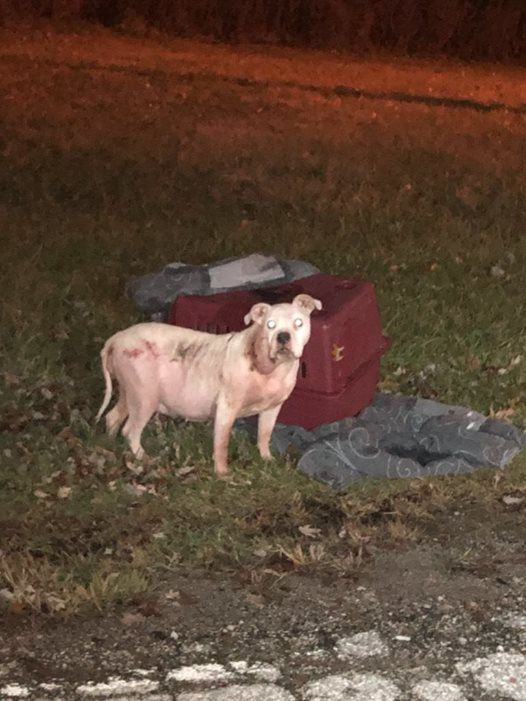 Justice For Lucy From Willoughby Oh Prehearing 01 10 2019 At