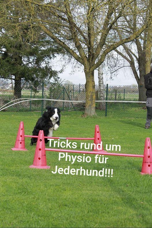 Tricks rund um Physiotherapie fr Jederhund mit Claudia Herbst