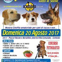 1 Expo Canina sotto le Stelle - Corleone