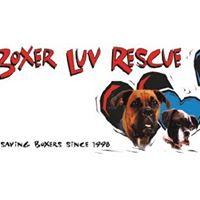 3rd Annual Boxer Luv 5K  10K Run