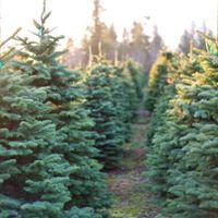 SOLD OUT -Christmas Tree Farm - Holiday Minis
