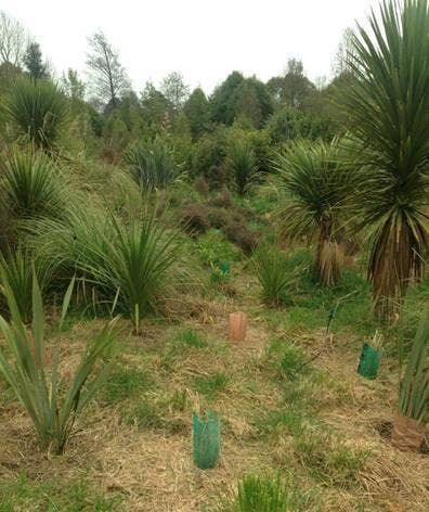 Mahoe Reserve Planting Day - July 2019