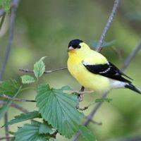 Free Spring Bird Walk in Roger Williams Park