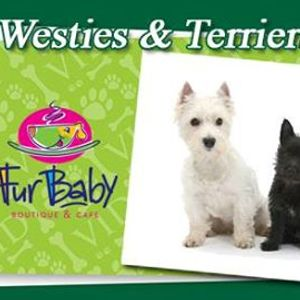 Westie Walk events in the City  Top Upcoming Events for