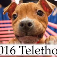 2016 Michigan Humane Society Telethon