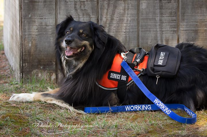 Owner Trained Service Dog Academy Trainer Certification At