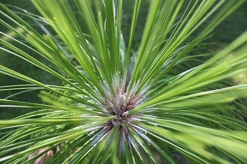 Backyard Discovery Tree Science