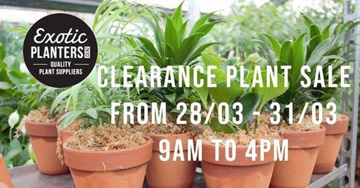 2019 Clearance Plant Sale