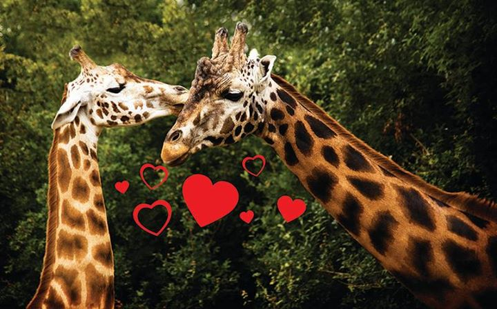Valentines Date Morning at Dublin Zoo