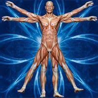 Intuitivna anatomija