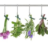 Beginning Herbs and Medicine Making Workshop