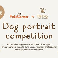 Dog Photo Competition - Pets Corner Winchester
