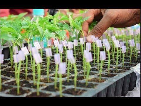 Successful Transplants Workshop - Soil Blocking and Grafting