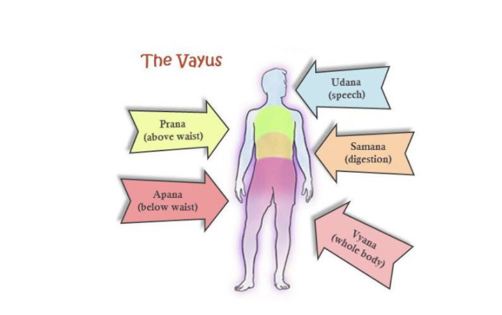 brief overview of the 5 vayus what is apana and prana at sin city