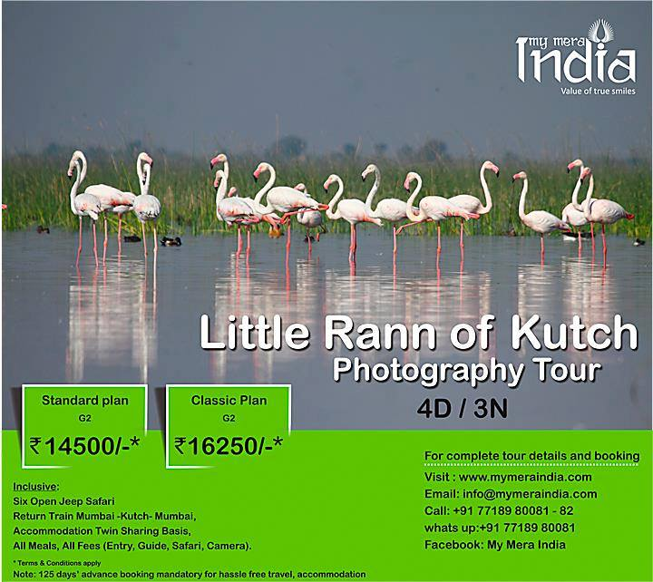 Little Rann of Kutch (LRK) Photography Tour on 19-22Jan 2017