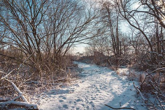 Tracking Forest Life in Winter - Free Event