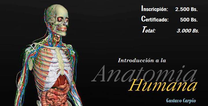 Curso de Anatomía Humana - San Juan de los Morros | San Juan de los ...
