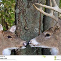Buck n Doe for Kevin Nagle &amp Jenny Clements