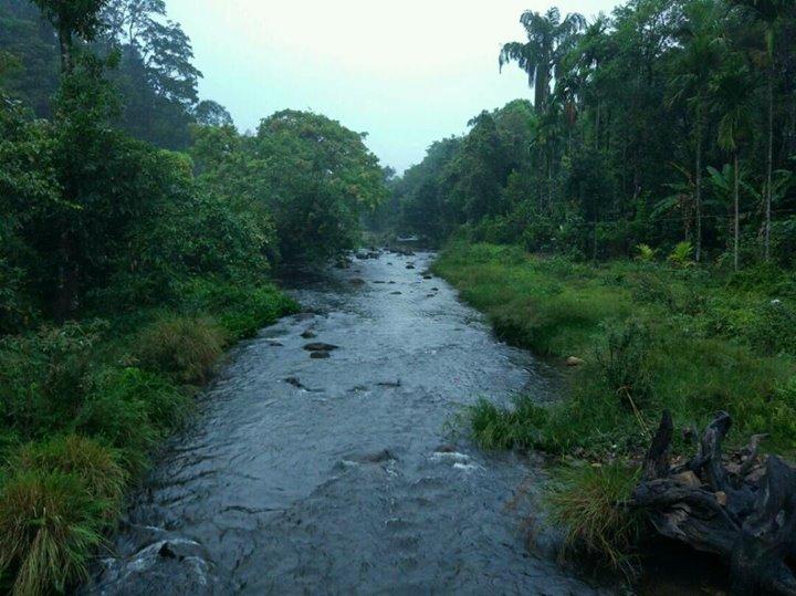 Jungle Trials