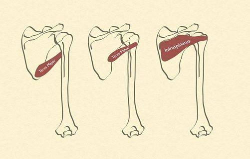 AnatomiFysiologi - lge-eksamineret