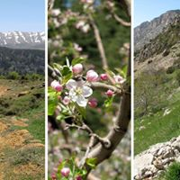 The Cedars of Tannourine  Guided Hike with Lunch