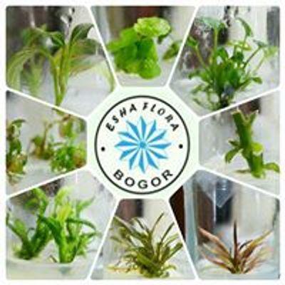 Esha Flora Plant Tissue Culture