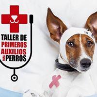 Taller de Primeros Auxilios para Perros