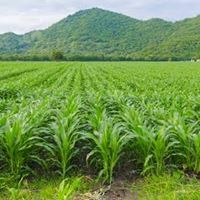 13th Philippine National Corn Congress