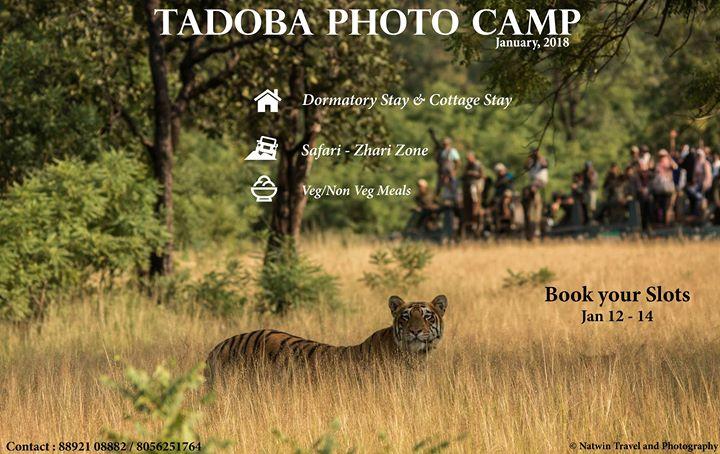 Tadoba Photo Tour  Zhari