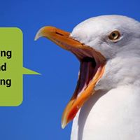 Worthing Writers Retreat Divebombing Seagull Edition