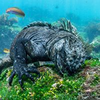 The Galapagos Experience Dive into the story of the Islands