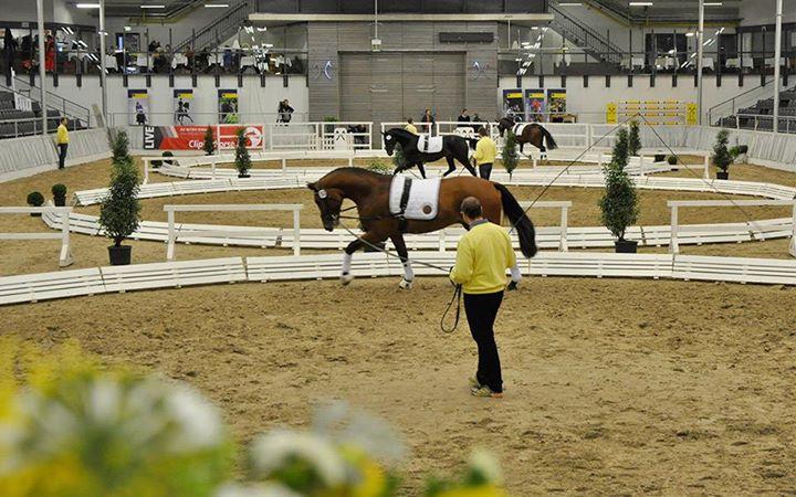 Verdener Pferde-Seminar Pferde richtig longieren