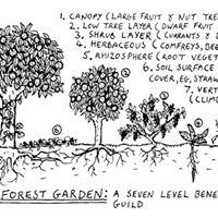 Forest Garden Workshop