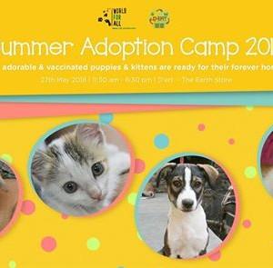 The Summer Adoption Camp