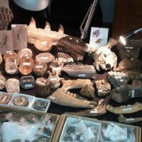 Oxford Mineral and Fossil Show