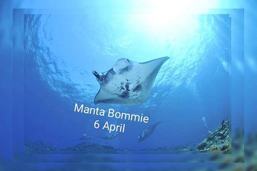Manta BommieFlat Rock