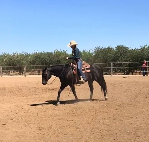 Norco Horse Expo At George Ingalls Equestrian Center And
