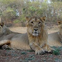 2N3D Gir National Park for Rs.11999person