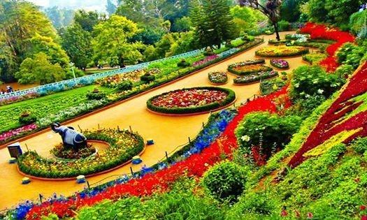 Ooty Flower Show 2018