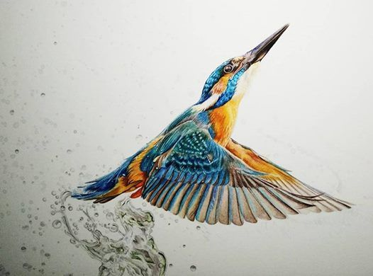SOLD OUT - Kingfisher Watercolour Workshop with Chloe ONeil