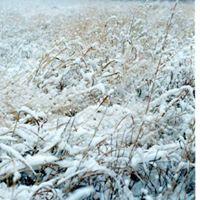 Nature Story Hour - Snow