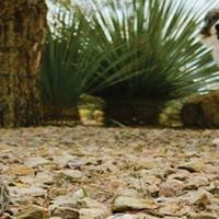 Reno Nevada Rattlesnake Avoidance Training for Dogs