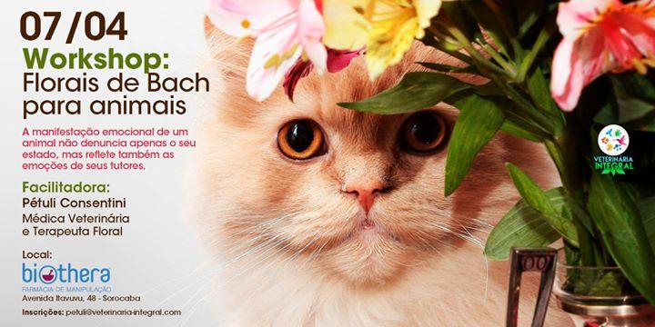 Workshop Florais de Bach para animais