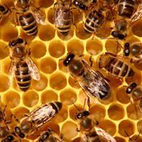 LCEEC Beekeepers Club