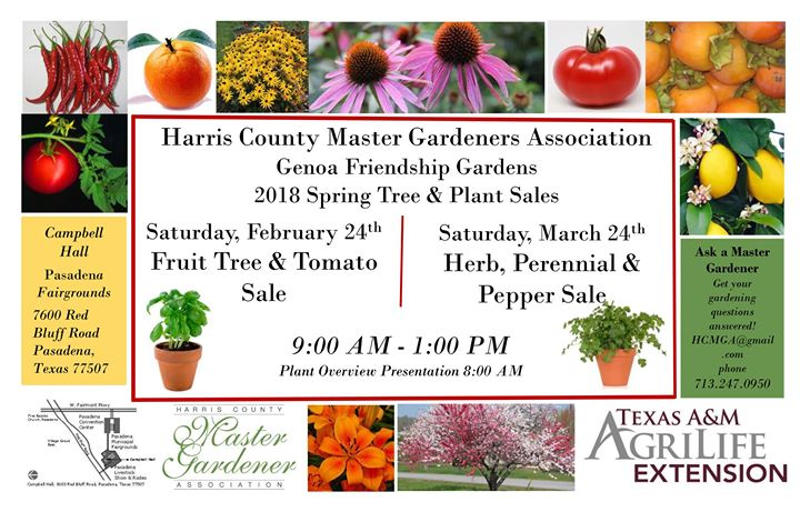 Genoa Friendship Gardens Herb Perennial Pepper Sale At Campbell Hall Pasadena Fairgrounds