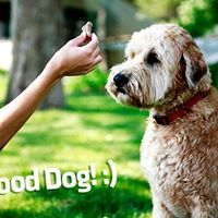 Overland Positive Dog Training Class